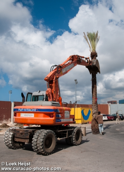 Putting huge palmtrees into the ground