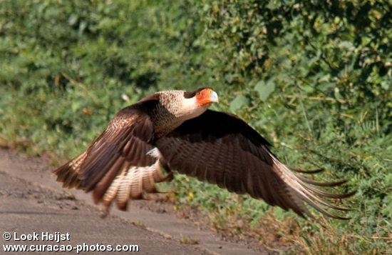 caracara leaving place