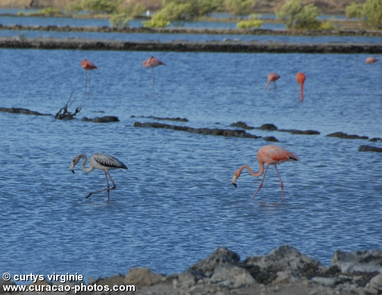 flamingo pink birth on the island