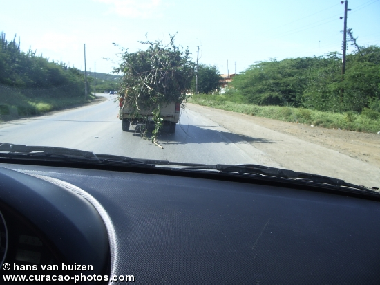 car with whole tree ??